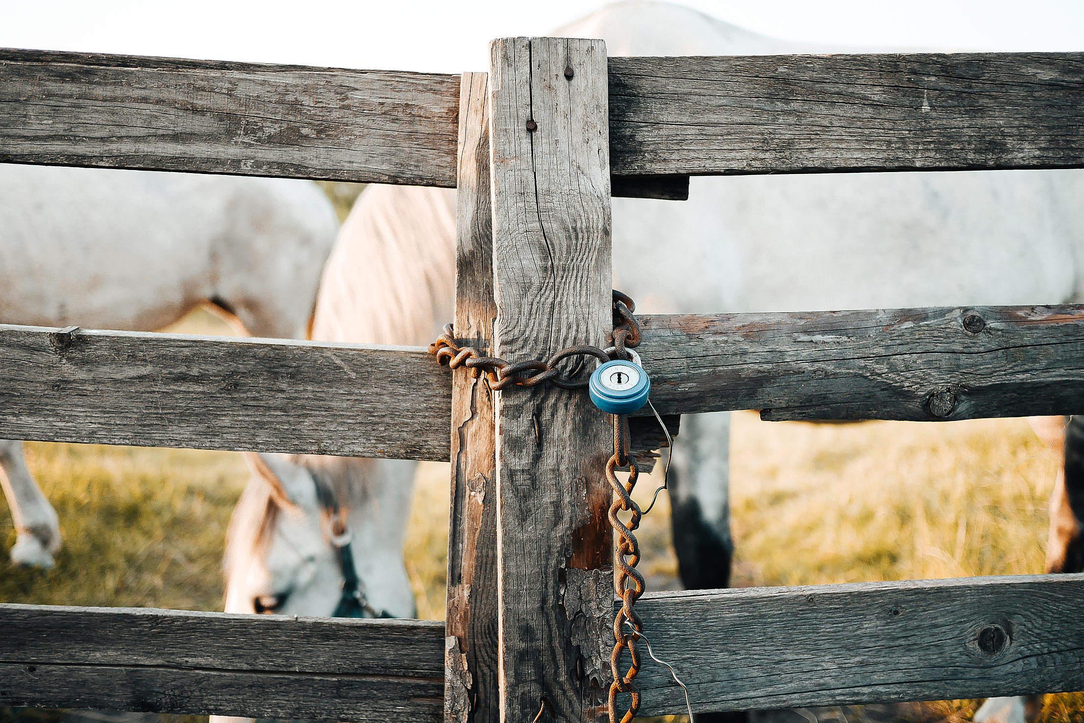 Fence company Wellington